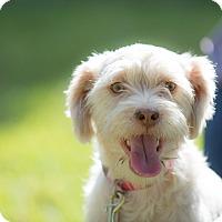 Adopt A Pet :: Dalma - La Jolla, CA
