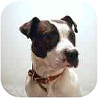 Adopt A Pet :: Petey - Long Beach, NY
