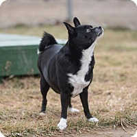 Adopt A Pet :: Mandy - Mechanicsburg, OH