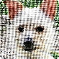 Adopt A Pet :: Kai - Boulder, CO