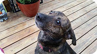 Eddie | Adopted Dog | ...