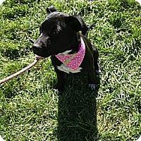 Adopt A Pet :: Heidi - Dallas, PA