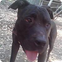 Adopt A Pet :: Jessie - Sacramento, CA