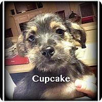 Adopt A Pet :: Cupcake - Indian Trail, NC