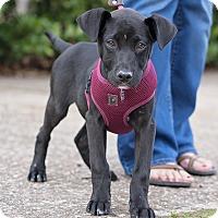 Adopt A Pet :: Tott - Kingwood, TX