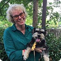Adopt A Pet :: Stryker - Sacramento, CA