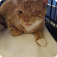 Adopt A Pet :: Sunny - Berkeley Hts, NJ