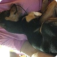 Adopt A Pet :: Zach - S. Pasedena, FL