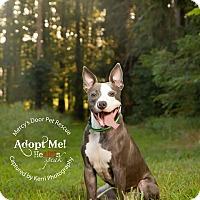 Adopt A Pet :: Stitch - Medina, OH