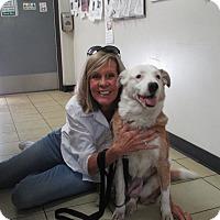Adopt A Pet :: WINTER - San Pedro, CA