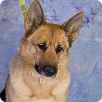German Shepherd Dog Mix Dog for adoption in Princeton, Minnesota - Amelia