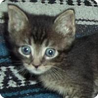 Adopt A Pet :: Kyle - Austin, TX