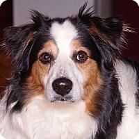 Adopt A Pet :: Juke - Sudbury, MA