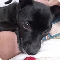 Adopt A Pet :: Bandit - Windermere, FL