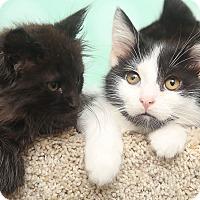 Adopt A Pet :: Kenai - Chippewa Falls, WI