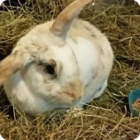 Other/Unknown Mix for adoption in Woburn, Massachusetts - Pepsi