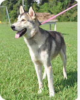Shepherd (Unknown Type) Mix Dog for adoption in Forrest City, Arkansas - Pete