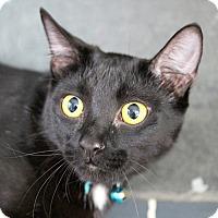 Adopt A Pet :: Edie - St. Louis, MO