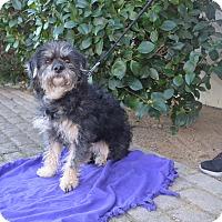 Adopt A Pet :: Maddie - Lodi, CA