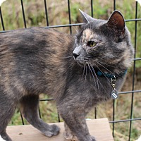 Adopt A Pet :: Blaze - Colorado Springs, CO