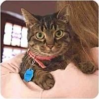 Adopt A Pet :: Hershey - Toledo, OH
