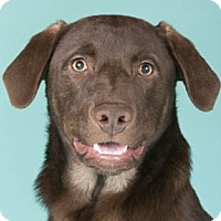 Adopt A Pet :: Asher*ADOPTED!* - Chicago, IL