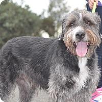 Adopt A Pet :: Rocky - Tumwater, WA