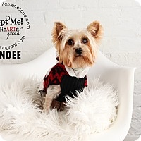 Adopt A Pet :: Mindee-Medical Hold - Omaha, NE