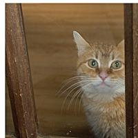 Adopt A Pet :: Sandra Dee - Covington, KY