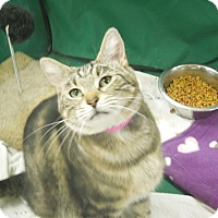 Adopt A Pet :: Stacy - Medina, OH