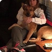 Adopt A Pet :: Little Max - Greeneville, TN