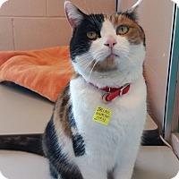 Adopt A Pet :: Trixie - Lakewood, CO