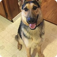 Adopt A Pet :: Sheldon - Baltimore, MD