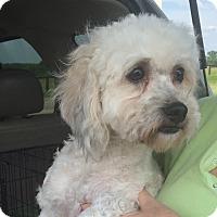 Adopt A Pet :: Bailey - LEXINGTON, KY