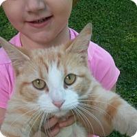 Adopt A Pet :: Peaches - Aurora, IN