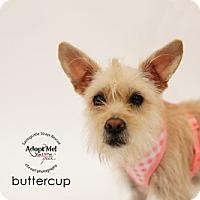 Adopt A Pet :: Butter - Aqua Dulce, CA