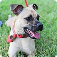 Adopt A Pet :: Camille - Conroe, TX