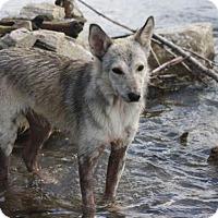Adopt A Pet :: Misty - Saskatoon, SK