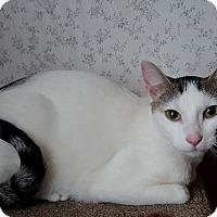 Adopt A Pet :: Loretta (JT) - Little Falls, NJ