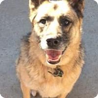 Adopt A Pet :: Maya - Canoga Park, CA