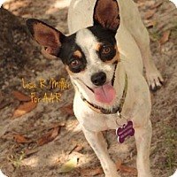 Adopt A Pet :: Skylar - Freeport, FL