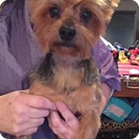 Adopt A Pet :: Rozwell - N. Babylon, NY