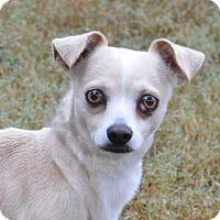 Adopt A Pet :: Rezy - Englewood, FL