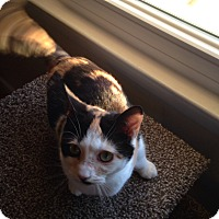 Adopt A Pet :: Callie - Millersville, MD