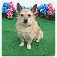 Adopt A Pet :: PEARL - available 1/17 - Marietta, GA