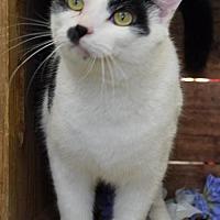 Adopt A Pet :: Otto - Herndon, VA
