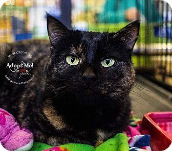 Domestic Mediumhair Cat for adoption in Mooresville, North Carolina - A..  Pamela