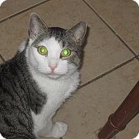 Adopt A Pet :: Dennis - Newtown, CT