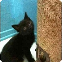 Adopt A Pet :: Licorice - Irvine, CA
