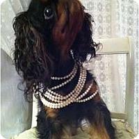 Adopt A Pet :: Blossom - Cumberland, MD